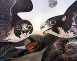 Great Footed Hawk, Falco Peregrinus, Detail by John James Audubon